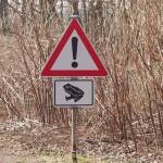Amphibienwanderung in Minden