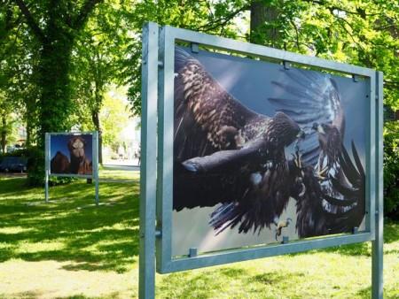 Zingst - der ganze Ort eine Galerie und Treffpunkt vo Fotointeressierten. Foto: Klaus Ottenberg