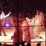 Zirkus Charles Knie: PETA kritisiert Stresstournee für Tiere