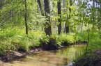 Der Ölbach im Holter Wald ist einer der drei Sennebäche, die bei der Fahrradtour erkundet werden können (Foto: Stadt Schloß Holte-Stukenbrock).
