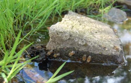Honigbienen nutzen die angebotene Wassertränke. © BUND Lemgo