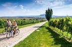 Unterwegs zwischen Weinreben in Südmähren. Foto: CzechTourism/Petr Slavík
