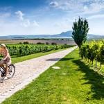 Per Rad durch Tschechiens Weinregion