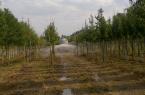 Durchdringende Bewässerung in einem Baumschulquartier.