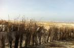 Juist_Winter_Strand_Osten