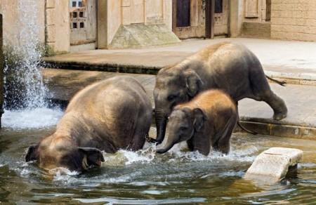 Erlebnis-Zoo Hannover, Elefantengehege nach dem Vorbild eine indischen Tempels. HMTG / Martin Kirchner