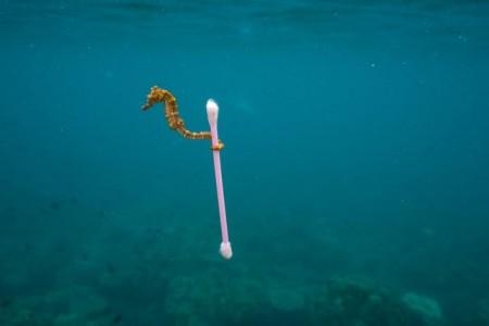 """""""Vorsicht Plastik"""" Die visualisierte Mahnung zu den Gefahren des Plastik-Mülls in den Meeren von National Geographic ©Justin Hofman"""