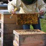 """Anfängerkurs """"Imkerei und Bienen halten"""" – noch 4 Plätze frei"""
