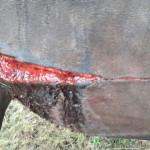 Bielefeld: Mutmaßlicher Tierquäler verletzt Pferde