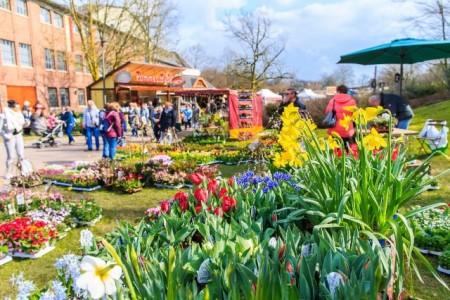 Frühjahrsmarkt 2018_ Thorsten Hübner