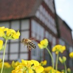 Frühlingsstart bei Bienen und Vögeln