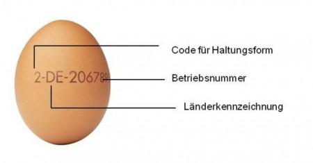 Die aufgestempelte Nummer auf dem Ei schafft bei Bielefeldern mehr Klarheit beim Einkauf über Erzeugerland und Haltungsform. (Quelle: ZDG Zentralverband der Deutschen Geflügelwirtschaft).