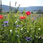 Städtische Betriebe verteilen Samentütchen mit Bienenweidesamen