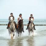 Aktiv auf sieben Weisen: Die Ostseeküste bewegt entdecken