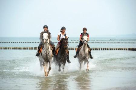 Reiten und Pferdesport