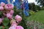 Blütenpracht in den lippischen Gärten im Rosenmonat Juni. Foto: privat