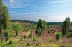 Lüneburger Heide, Foto: Pixabay
