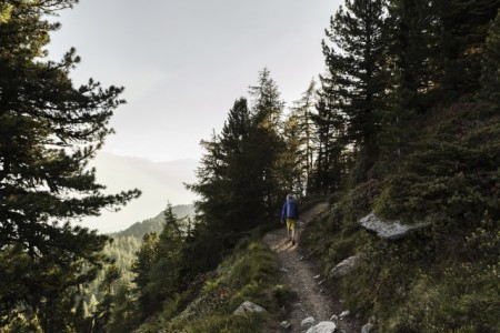 Zirbenweg_Inntaler Höhenweg. Foto: Tirol, Sebastian Schels