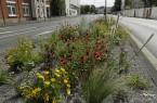 Staudenmischpflanzungen sorgen für einen neuen Blickfange auf Güterslohs Straßen, Foto: Stadt Gütersloh