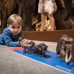 Museumspädagogik, Ausstellung Vom Kommen und Gehen, LWL-Museum für Naturkunde