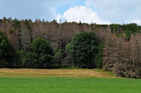 Trockene Kronen: Überall im Naturpark Teutoburger Wald /Eggegebirge haben die Bäume aufgrund der hohen Temperaturen Schaden genommen und leiden unter Wasserstress. (Foto: Stadt Nieheim/privat)