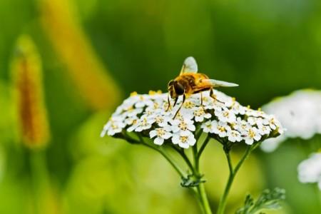 2.500 Quadratmeter hinter dem Gütersloher Bertelsmann Corporate Center bieten heimischen Insektenarten einen neuen Lebensraum. Foto: Bertelsmann, Fotograf Steffen Krinke