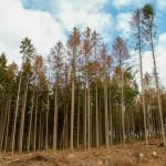 Wälder rund um Hermannsdenkmal und Externsteine bieten kläglichen Anblick