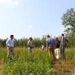 Fremdländische Baumarten beeindrucken Forstexperten