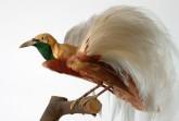Paradiesvogel, Foto:  Weserrenaissance-Museum Schloss Brake