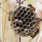 Brachflächen sind wertvolle Rückzucksgebiete für viele im Bestand bedrohte Tierarten