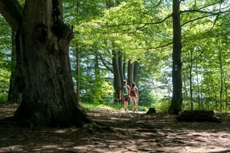 Wandern auf der Schwäbischen Alb, Foto: © Gregor Lengler