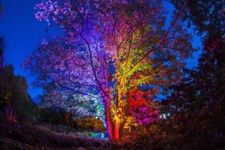 Herbleuchten Baum, Foto: Thorsten Hübner