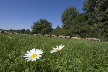 Landschaft, Schafsherde, Foto: © Eike Dubois
