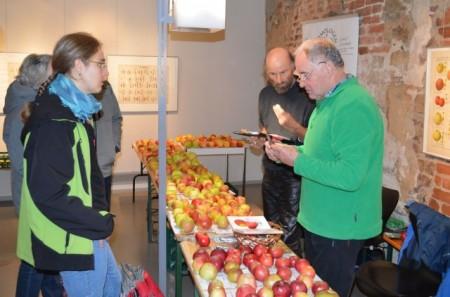 Pomologe Jürgen Mortag, im Bild rechts, kostet einen mitgebrachten Apfel um entscheiden zu können, ob die vermutete Sorte auch mit dem ihm bekannten Geschmack übereinstimmt. Foto: Bund Lemgo