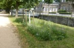 Allee, Foto:  Stadt Detmold