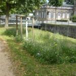 Stadt Detmold stellt im Frühjahr Saatgut zur Verfügung