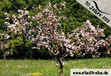 50 Obstbäume, Foto: Stadt SHS