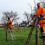 Die Stadt verschenkt 250 Obstbäume!