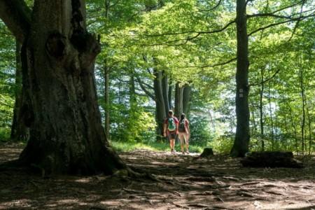 Foto: Tourismus BW