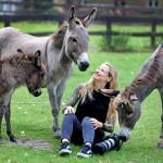 Tierpark – Kalender erzielt  Erlös von 7332 Euro