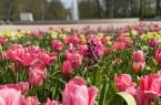 2020-04-16_09_Gartenschau-Bad-Lippspringe-oeffnet-am-20.-April-wieder-f453b90b21883dcg8c63784cdf31484f