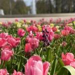 Gartenschau Bad Lippspringe öffnet am 20. April wieder