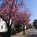 Stadt wirbt für bürgerschaftliches Engagement zur Pflege des Baumbestandes
