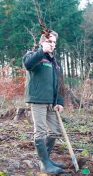 Der Bielefelder Stadtförster Herbert Linnemann mit einem Setzling. Er betreut die Pflanzaktion rund um den Stadtwald.