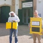 Lebende Bienen kehren ins Naturkundemuseum