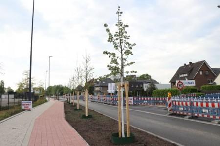 Klimaunempfindliche Sorten an der Verler Straße gepflanzt.Foto:Stadt Gütersloh