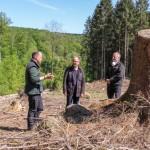 300.000 junge Bäume für nachfolgende Generationen
