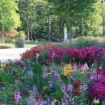 Öffentliche Führung zu Blüten und Bäumen am Sonntag