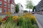 Stehen in voller Blüte: Die farbenfrohen Staudenmischpflanzungen auf den Mittelinseln entlang der Friedrich-Ebert-Straße im Stadtzentrum ergeben ein farbenfrohes Bild.Foto:Stadt Gütersloh