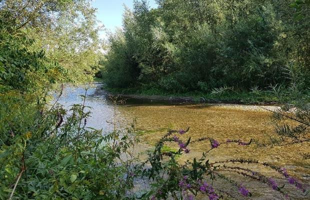 Die Lippesee-Umflut bietet bereits Lebensraum für stark bedrohte und besonders schützenswerte Gewässer- und Auenbewohner. Auch der neue Abschnitt könnte nach der Renaturierung so aussehen. (Fotos: Bezirksregierung Detmold)